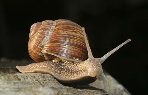 Is snail secretion the next magic beauty ingredient? Photo Credit: Jiri Bohdal